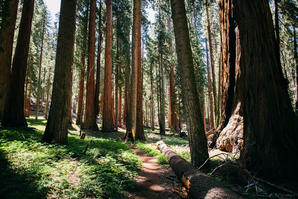 giants+forest+sequoia+national+park.jpg
