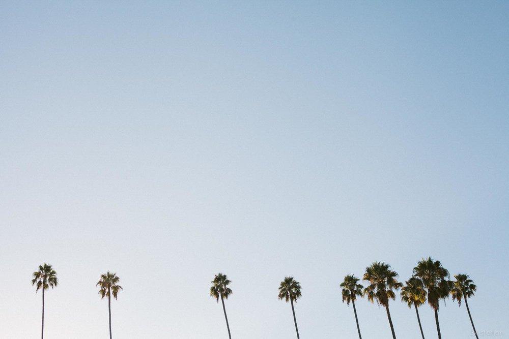 palm+trees+southern+california.jpg