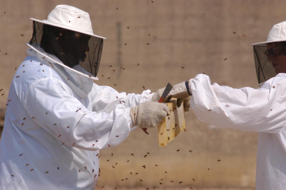 bees_153.jpg