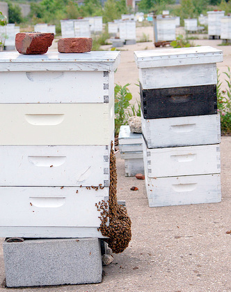 Picture by Emyduck via Flickr, at our apiary.