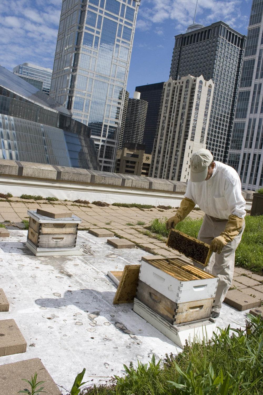 City Hall roof Chicago.jpg