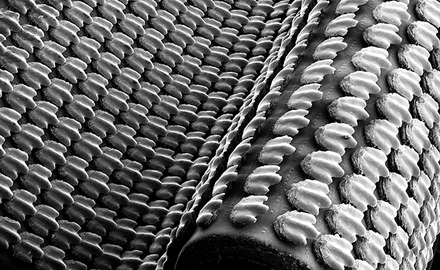 Artificial shark skin with rigid denticles attached to a flexible membrane. Photo credit: James Weaver.