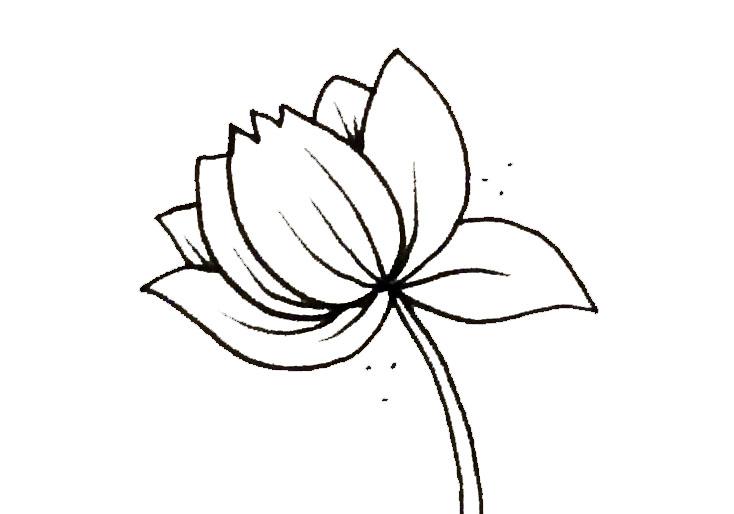 opening_lotus.jpg