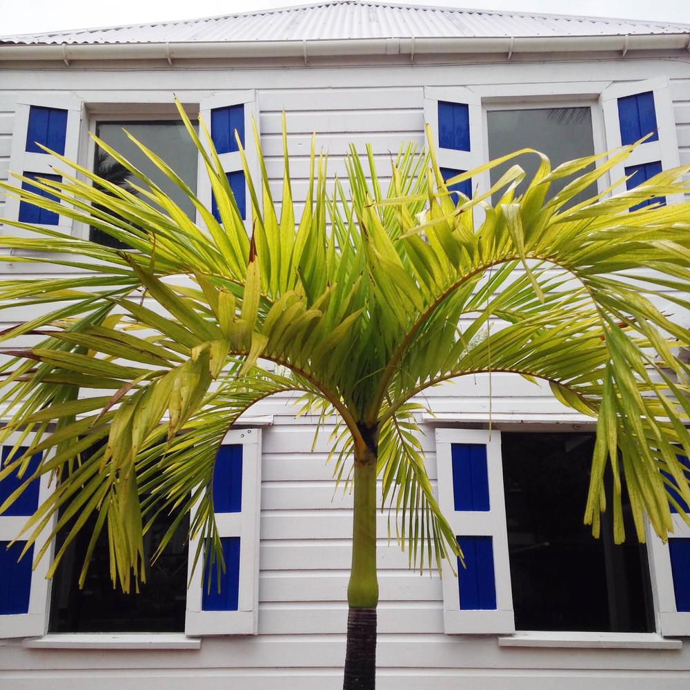 Palm Windows