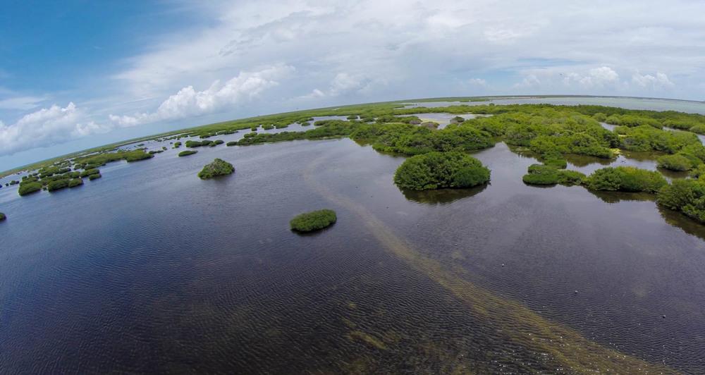 Approaching Frigate Bird Sactuary
