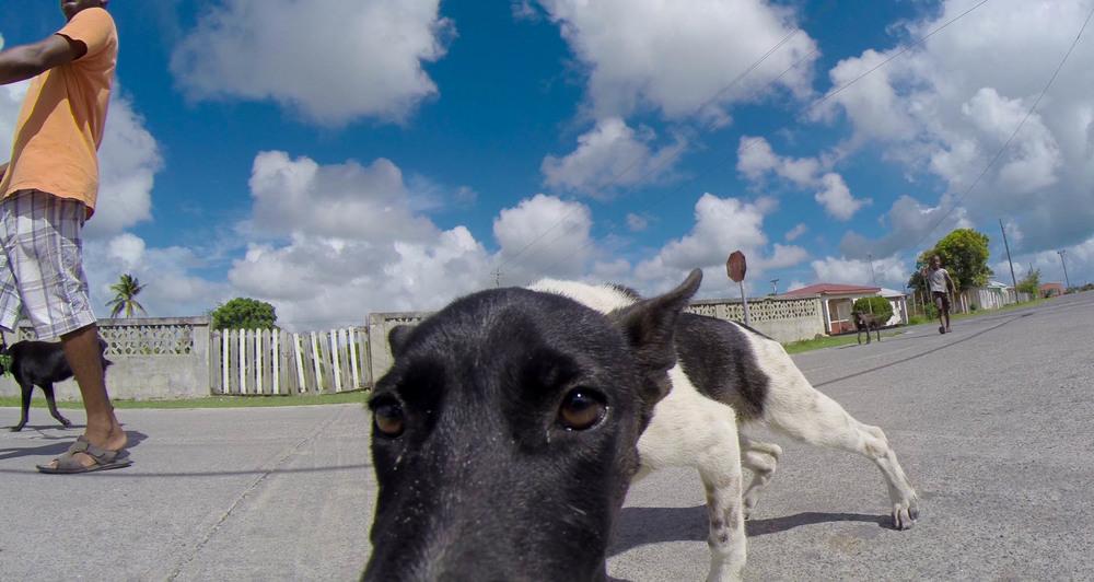 Local Doggie