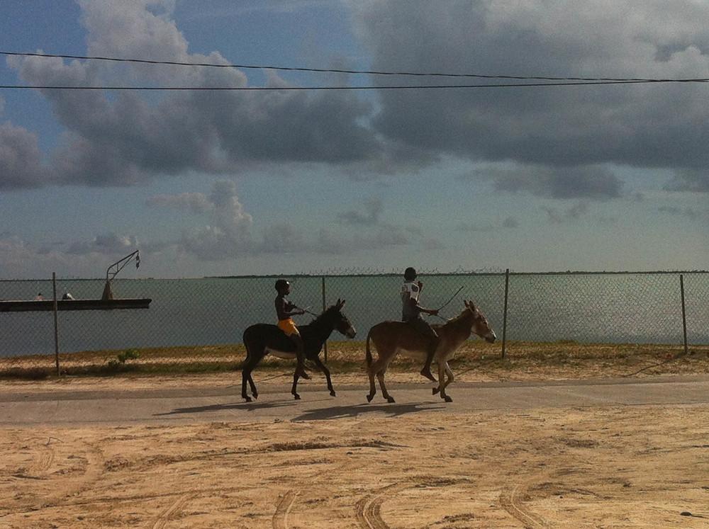 Boys on Donkeys