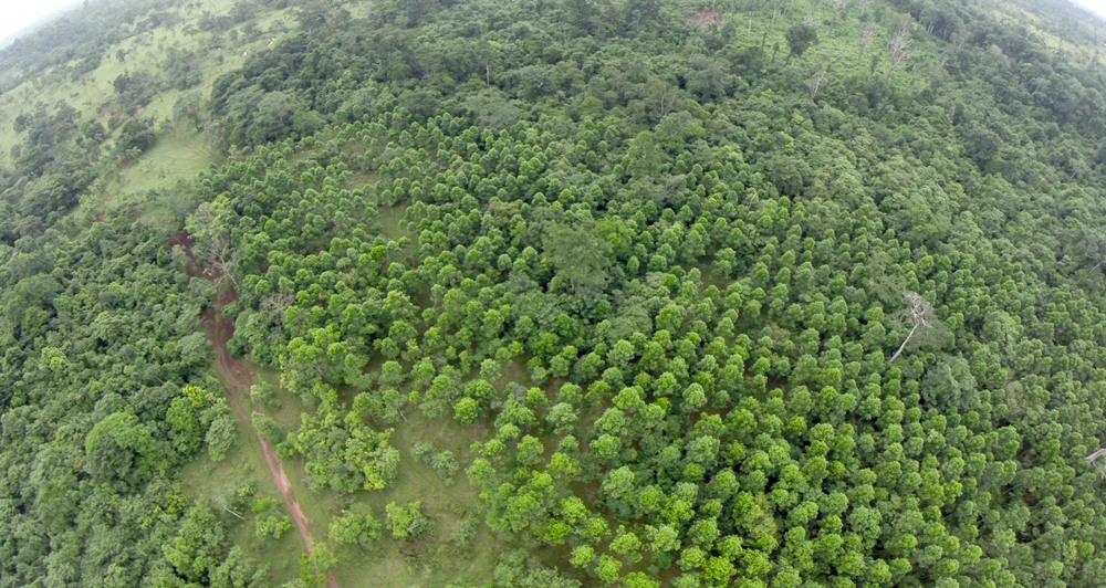 Reforestation - Quadcopter still, Tom