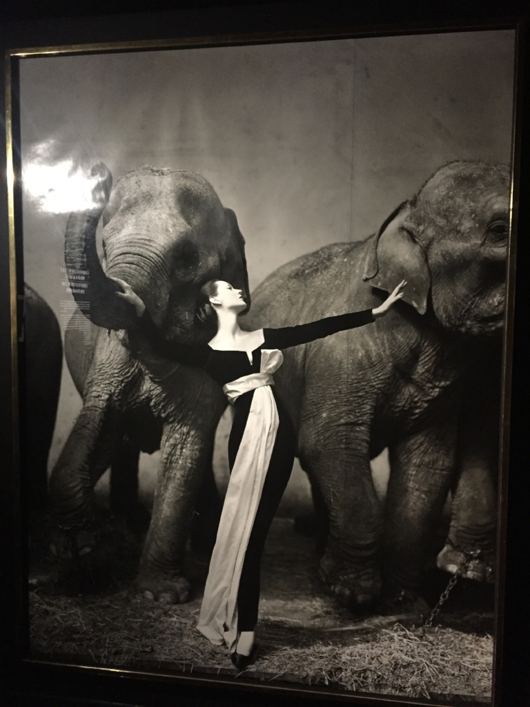 This iconic photo of the model Dovima with Elephants taken by Richard Avedon draped in Dior Couture Cirque d'hiver 1955 was dedicated it's own wall!