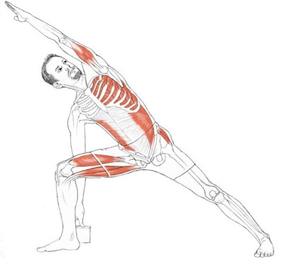 yoga anatomy images male 2.jpg