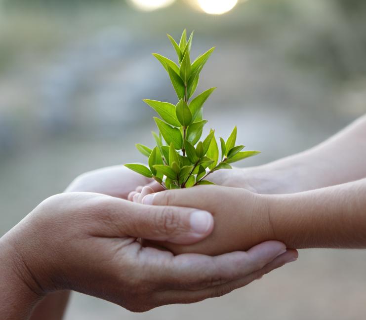 hand-tree-parent.jpg