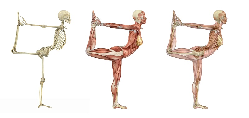 Yoga-Anatomy-Workshop-800x379.jpg