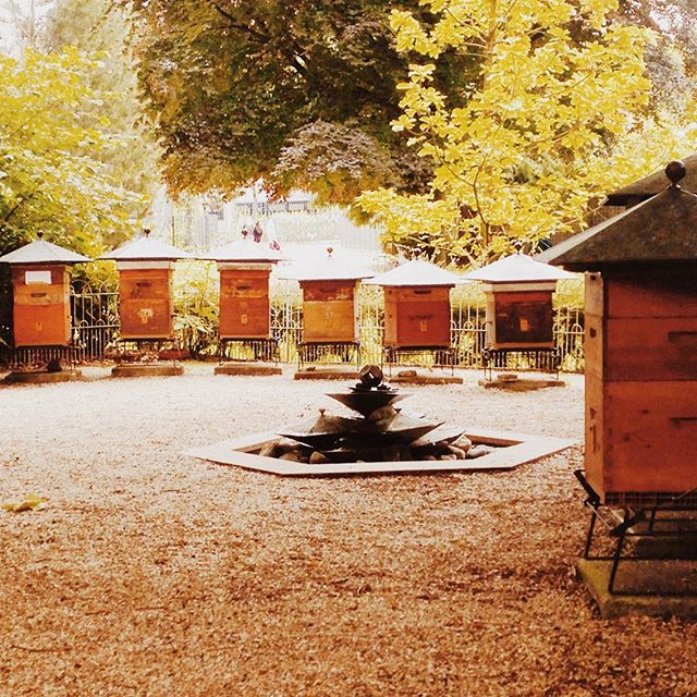 "Have you ever heard of the bee hives that reside in Paris' spectacular Jardin du Luxembourg? 🇫🇷🐝 The bee hives are nestled in a corner of the Luxembourg gardens— conveniently close to the meticulously cared-for fruit orchard. The bees play a critical role in pollinating the bee-utiful orchard + surrounding natural environments. 〰️ With Paris being a completely pesticide-free zone, this spot is an absolutely perfect place for pollinators—with an abundance of organically grown flowers and fruit trees! It's no wonder these Parisian bees are so extraordinarily healthy! 🐝💛 With France fighting back + outlawing the usage of pesticides, there have been no signs of the well-publicized ""colony collapse"" plaguing bees around the world. This is huge!!!! In the U.S. most commercial apiaries replace their queen at least once a year, whereas the queen bee of the Luxembourg Gardens lasts for 2-3 years. This longevity is due to healthier living conditions + the lack of chemicals/pesticides polluting the air + natural landscapes. 〰️ Jardin du Luxembourg is also home to a beekeeping school, a permanent fixture in the garden since 1856! Let's join France + their pesticide ban, + help educate others on ways we can abstain from pesticide usage! Learn more on ways to help save the pollinators, as well as how to create pollinator safe environments—with the link in our bio! 👆 Join the movement + #beethechange"