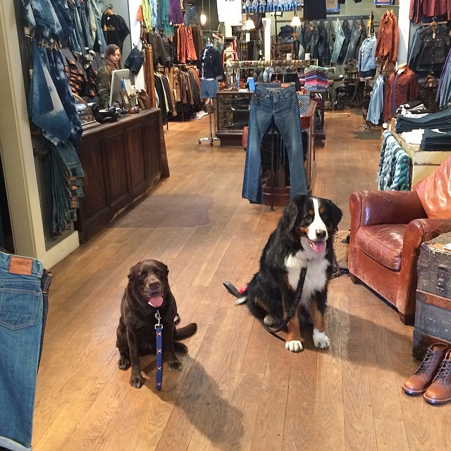 A couple of friends visiting the shop today #jeanshop #jeans #dogs #selvedge #beautiful #greatshot #customer #fashion #pets #nyc #rawdenim #indigo #denim #madeinusa #madeinamerica