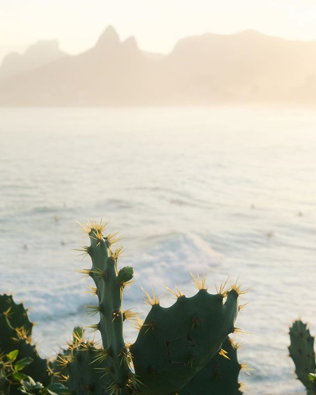 🌵 🌵🌵 . . . . . #riodejaneiro #ipanemabeach #arpoadorbeach #praiadeipanema #ipanema #sunset #travelbrazil #brazil #passionpassport #natgeotravel #southamerica #obrigado #darlingescapes #girlswhotravel #travelgram #lovetotravel #traveldiary #simplyadventure #openmyworld #mytinyatlas #beautifuldestinations #brasil #summervibes #visualsoflife #highwaybrazil