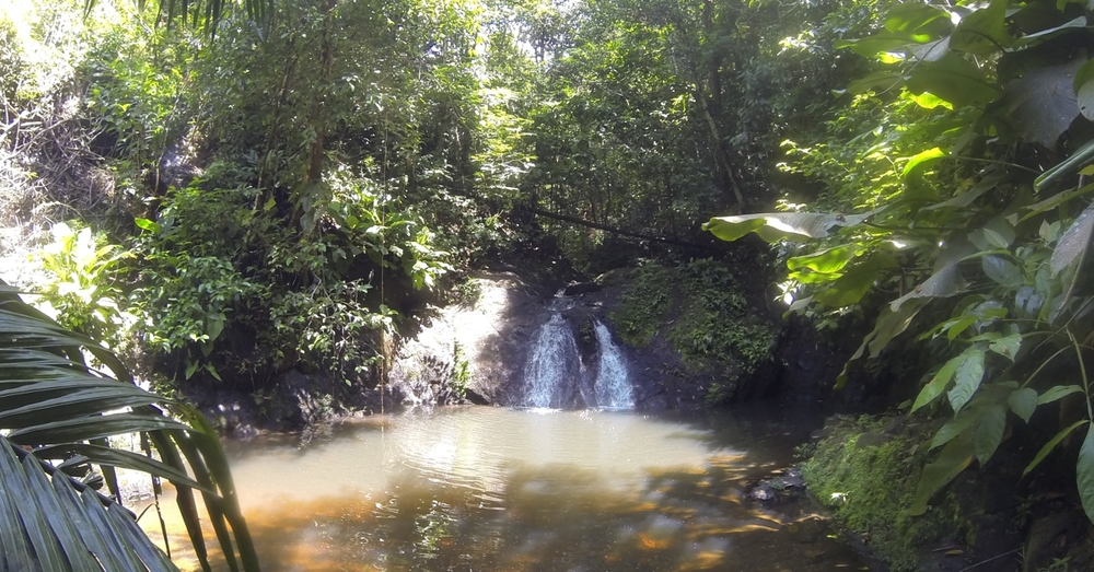 Waterfall in the Jungle.