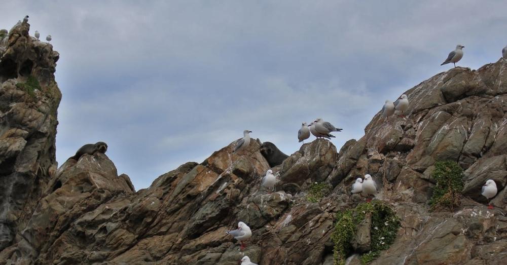 seals-and-birds.jpg