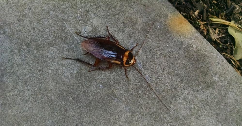 Sydney Roach