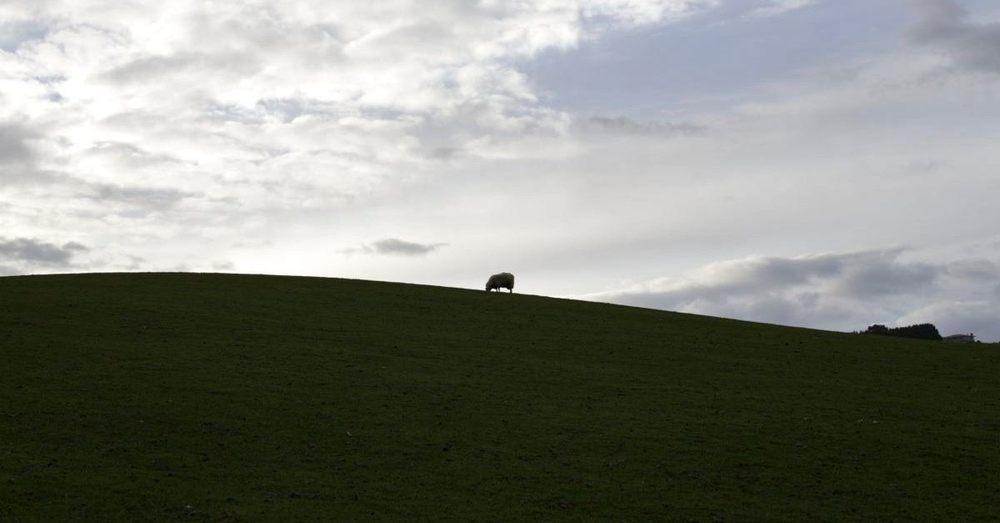NZ169.jpg
