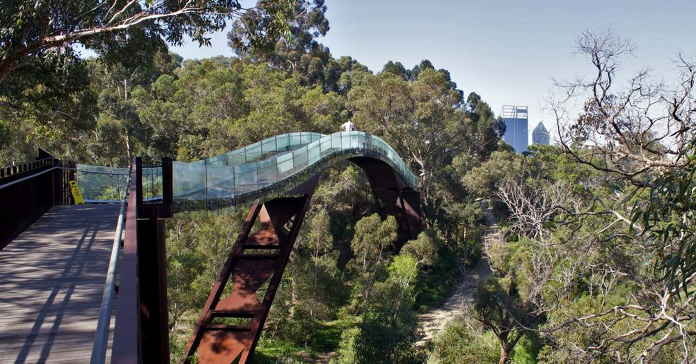 The glass-lined arch on the Tree Top Walkway.