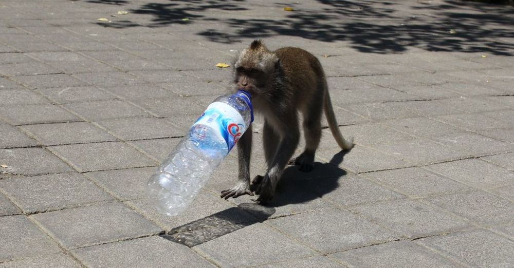 monkey-with-a-water-bottle.jpg