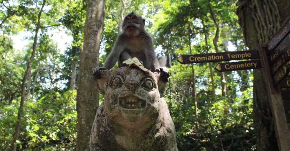 mean-monkey-monday-13.jpg