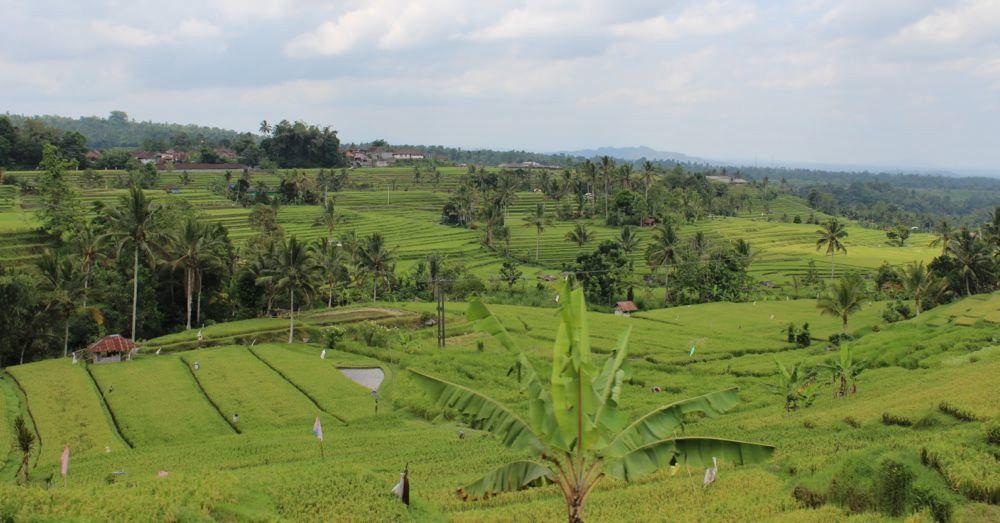 jatiluwih-rice-terraces-1.jpg