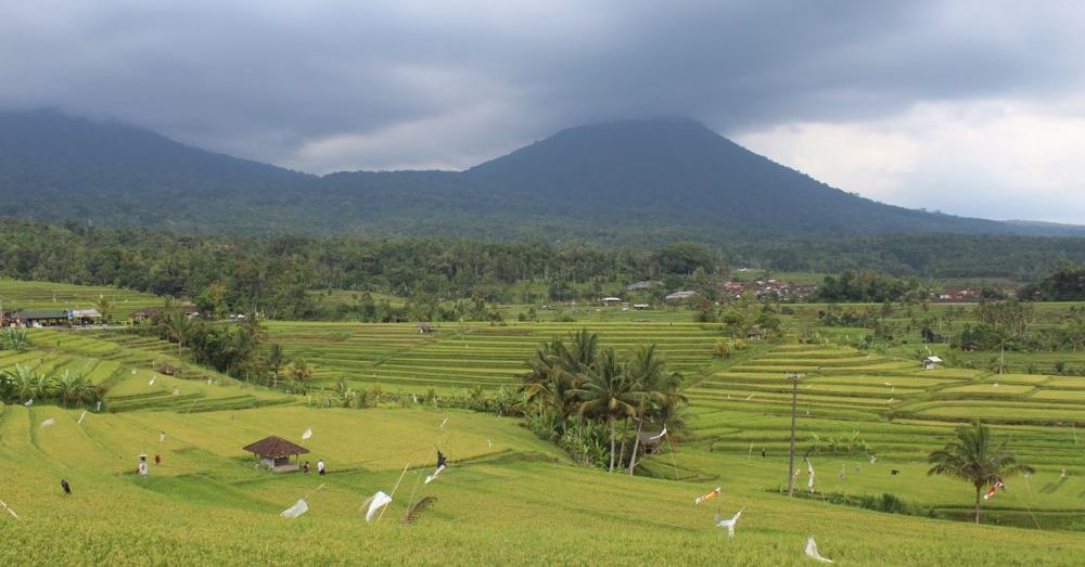 jatiluwih-rice-terraces-2.jpg