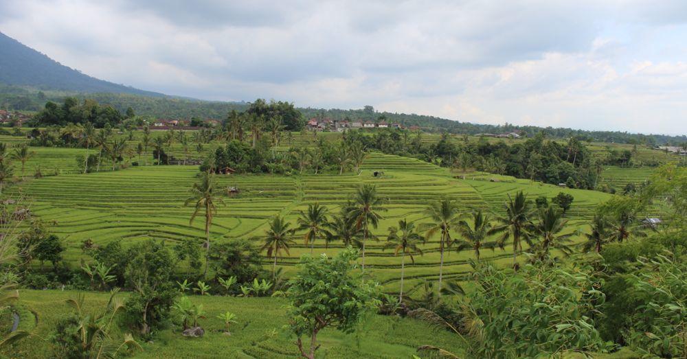 jatiluwih-rice-terraces-3.jpg