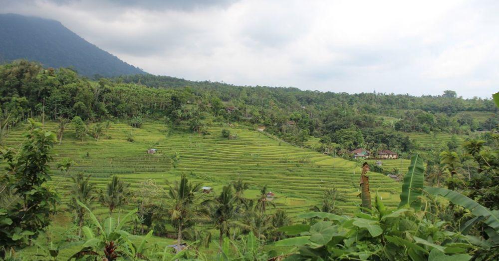 jatiluwih-rice-terraces-4.jpg
