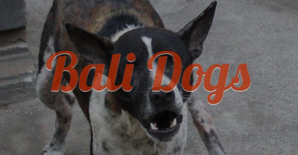 bali-dog-00.jpg