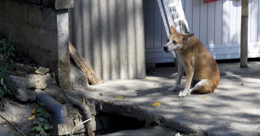 bali-dog-03.jpg