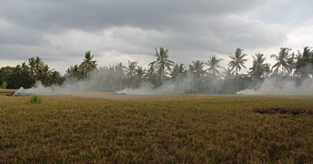 rice-field-burning.jpg