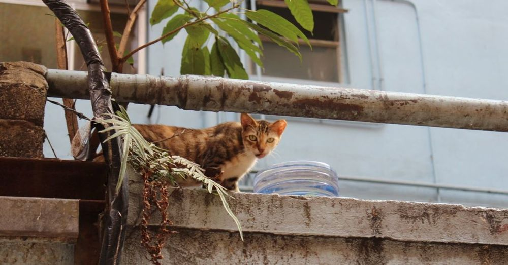 Hong Kong Cat: On the prowl for a good meal in Causeway Bay.