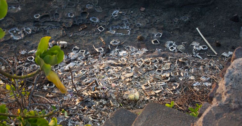 Discarded canang sari.