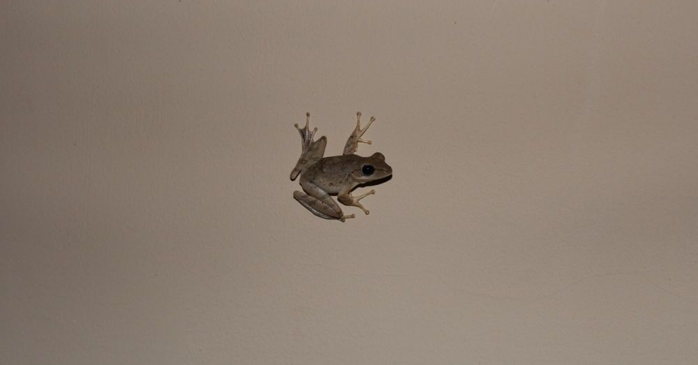 Frog on the wall.
