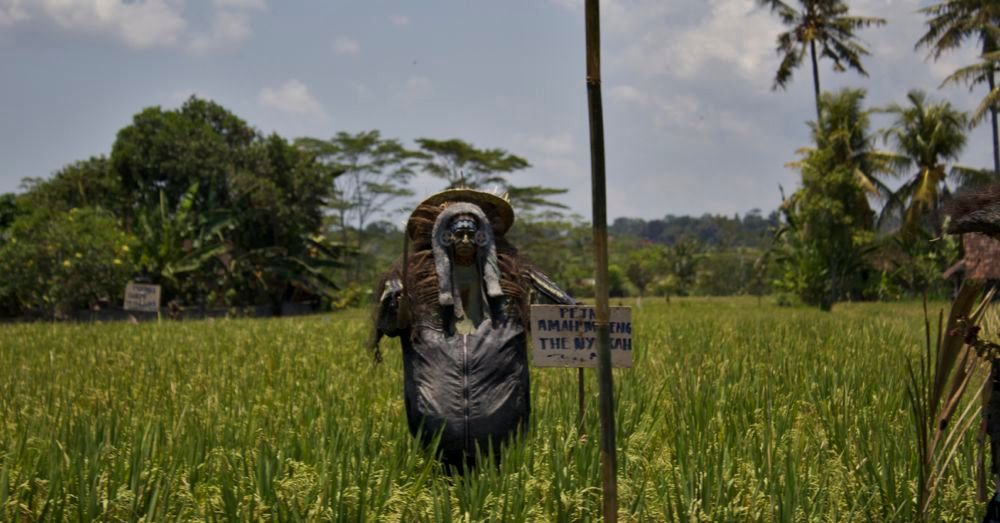 Rice paddy scarecrow