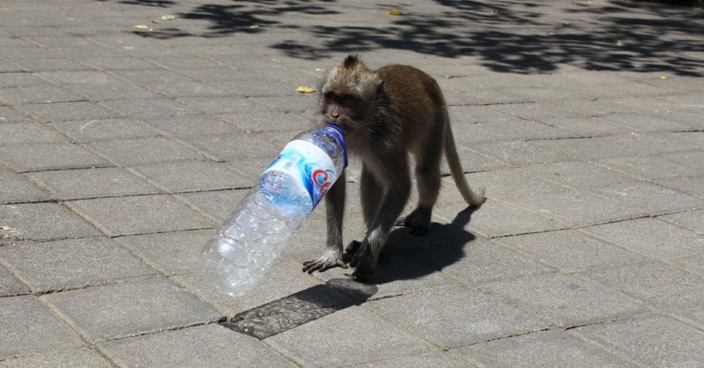Monkey with a water bottle.