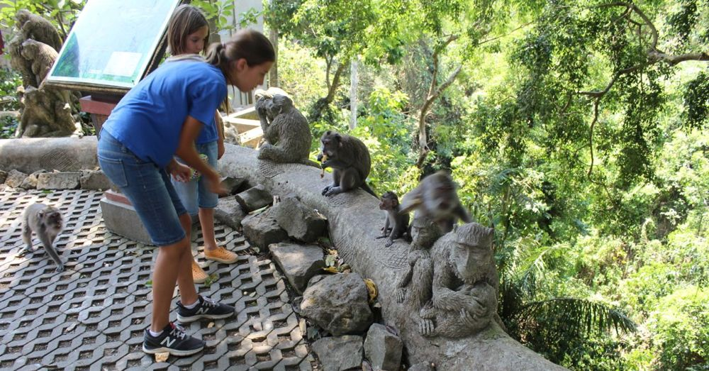 Feeding monkeys.