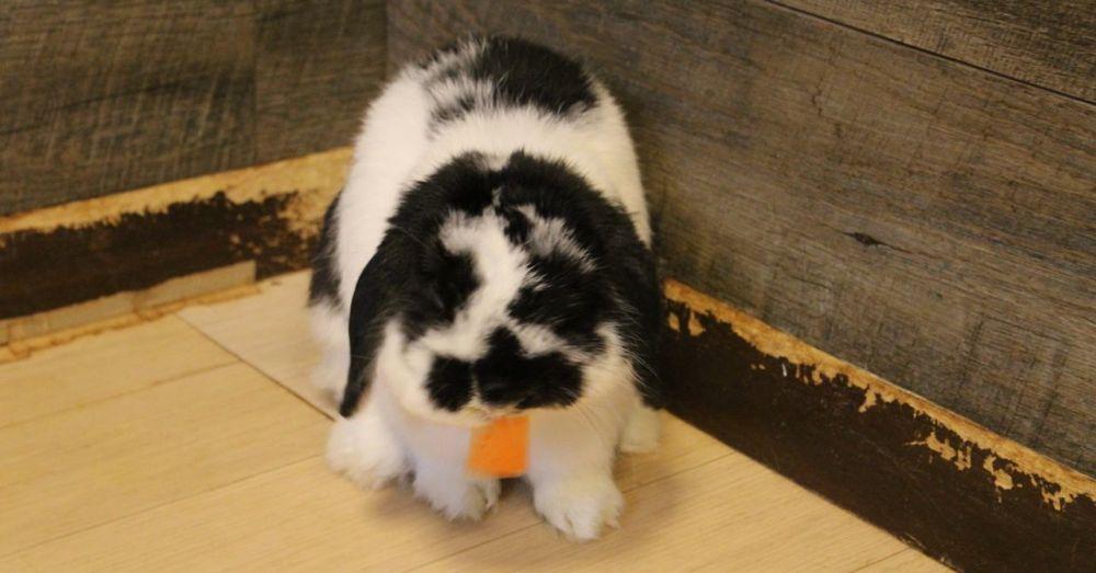 Ushi liked carrots.