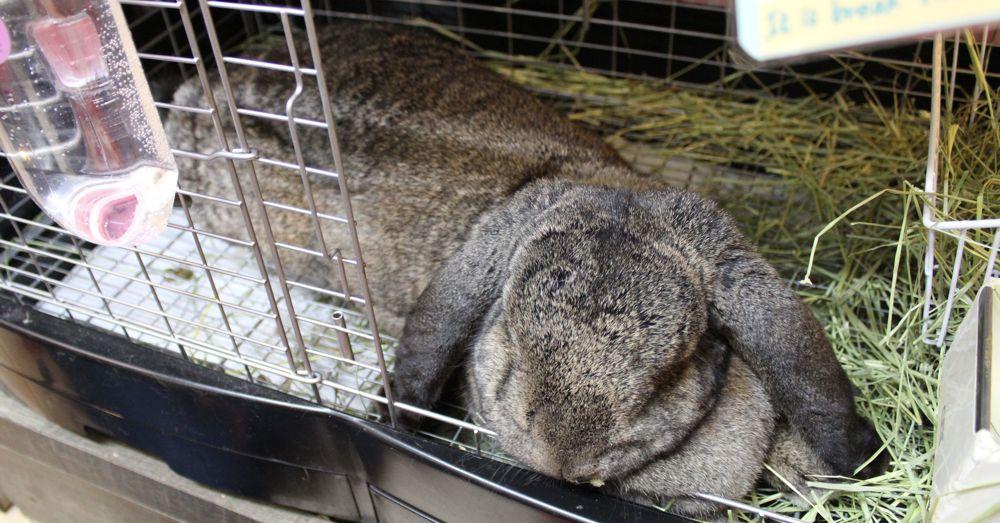 Big bunny.