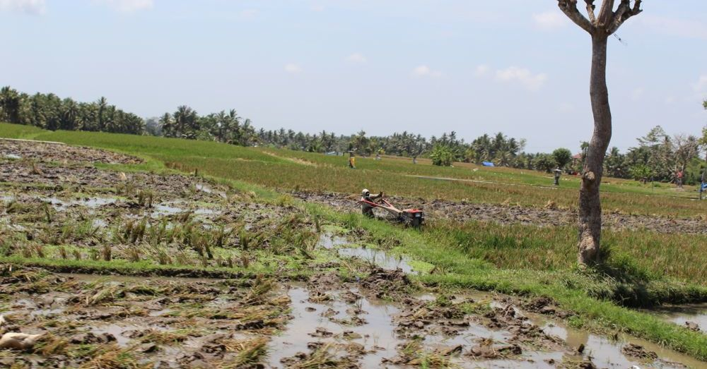 Farming in Bali