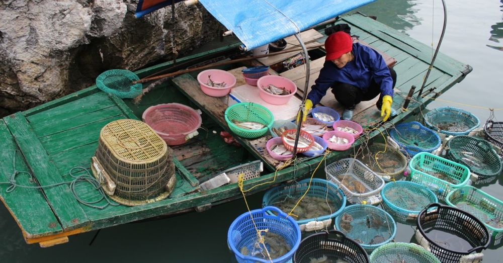 Floating fish market.