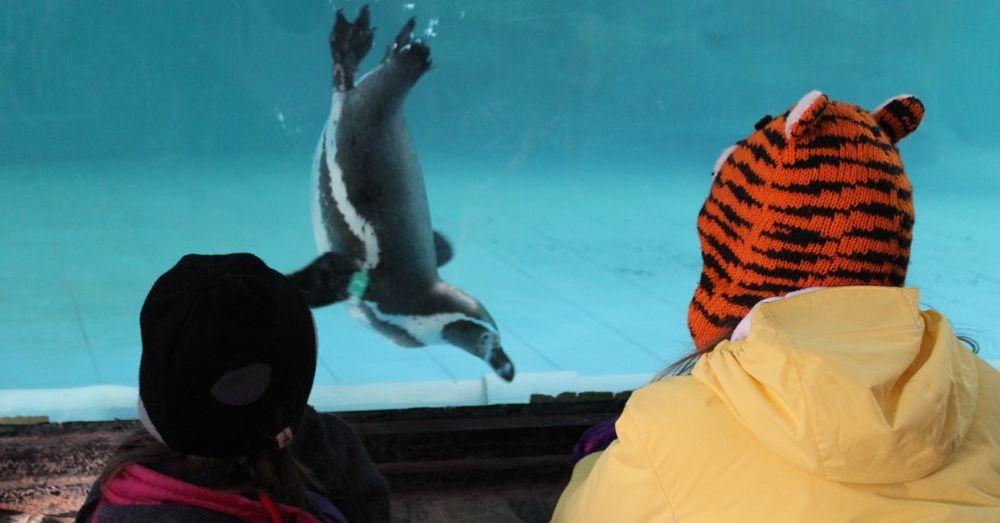 Penginland Penguin