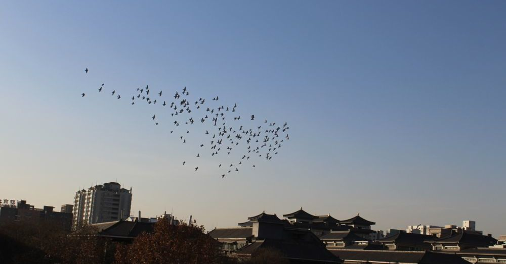 Birds of Xi'an