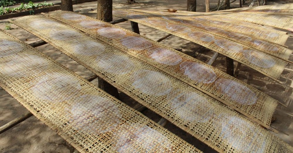 Rice paper drying on mats.