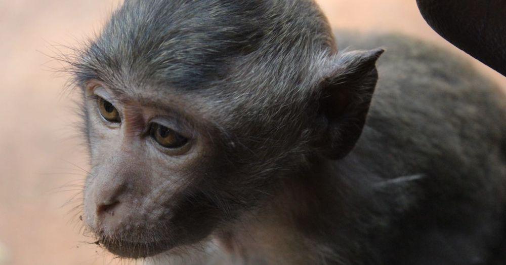 Young monkey.
