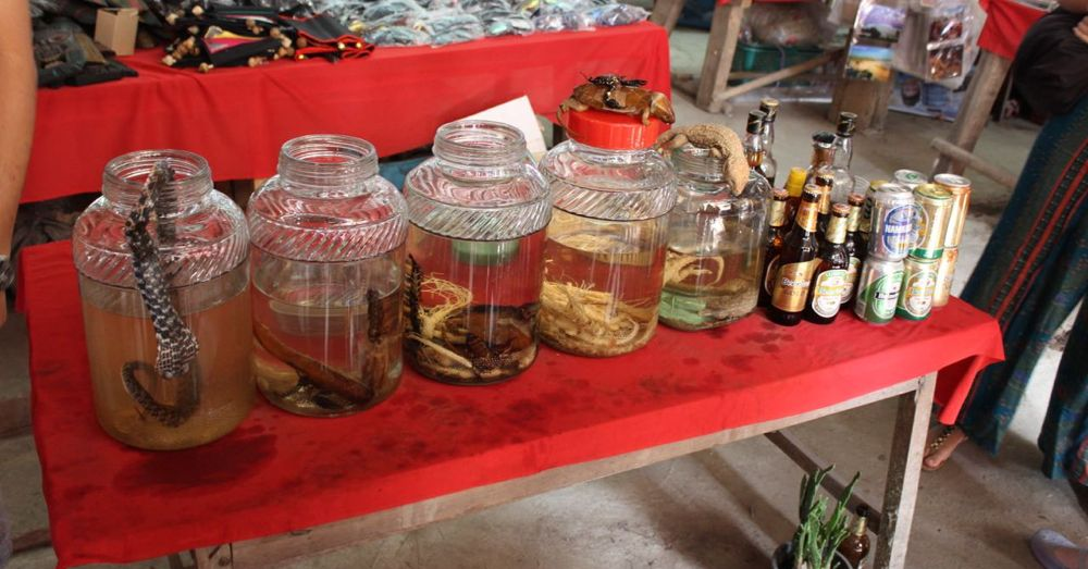 Weird alcohol in Laos. That's tiger penis on the left.