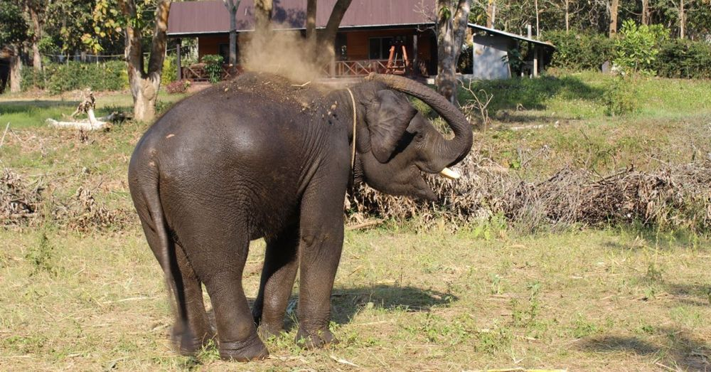 Clean elephant, dirty elephant.