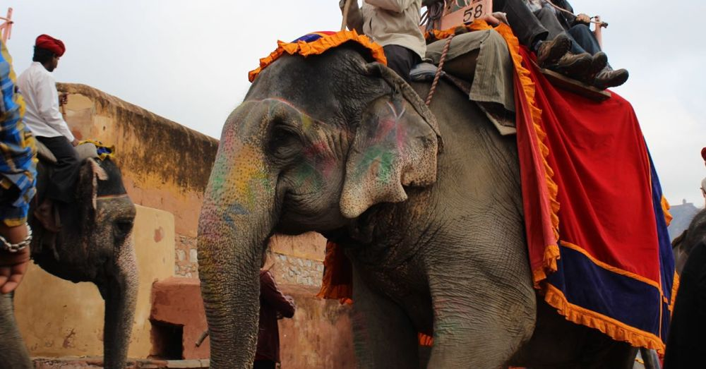 The elephants were painted to celebrate Holi, an upcoming spring festival.